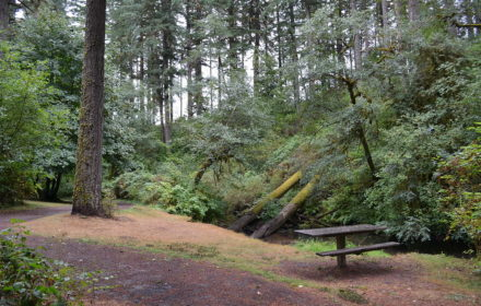 Picture from Alderwood State Park Oregon
