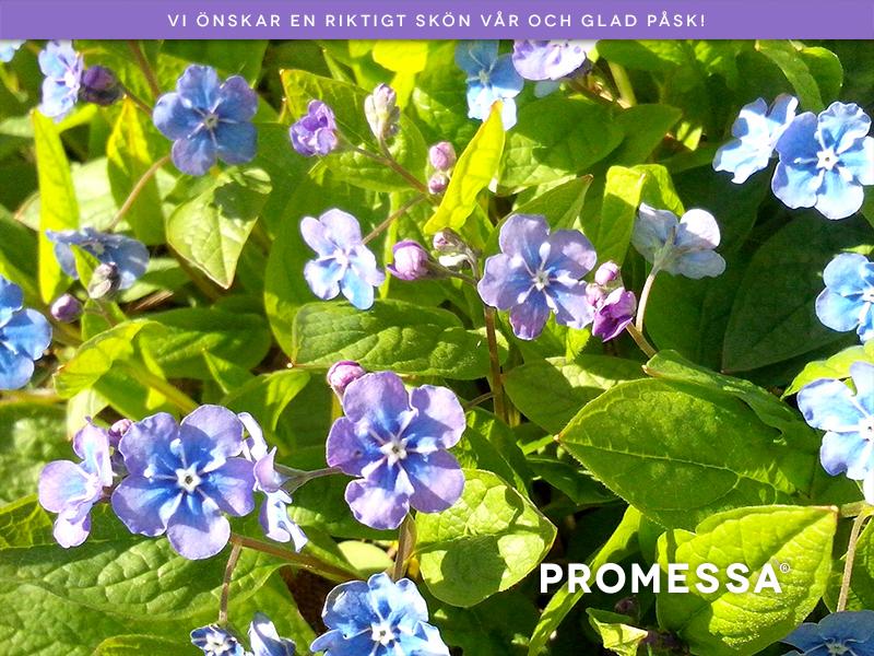 Glad Påsk önskning med vår blomro