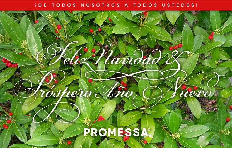 promessa_feliznavidad2017_880x560